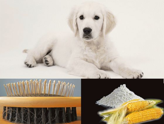 Use Cornstarch for Dogs