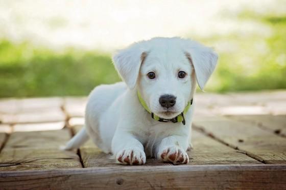 Puppies - Correct Behaviour Training