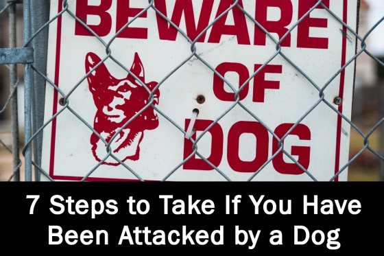 7 Steps to Take If You Have Been Attacked by a Dog