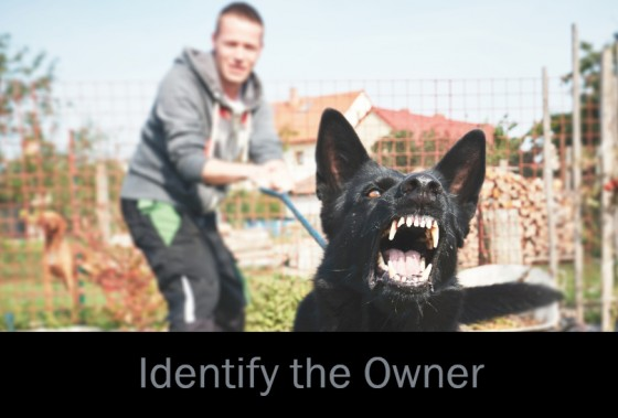 Identify the Dog's Owner